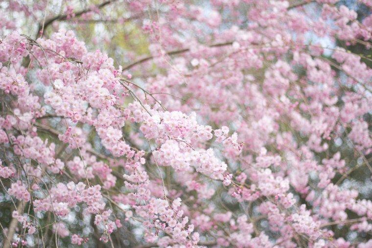jamie-wong_kyoto_1145-2